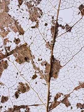 abstracte natuur van Marieke Funke