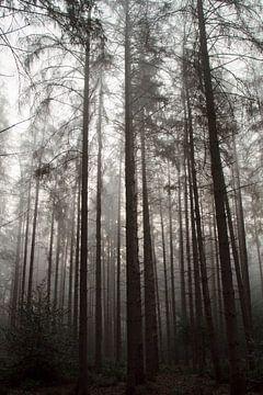 Ein verwunschener Wald von Sabina Meerman