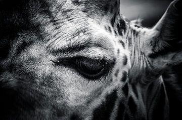 Giraffe in zwart / wit van