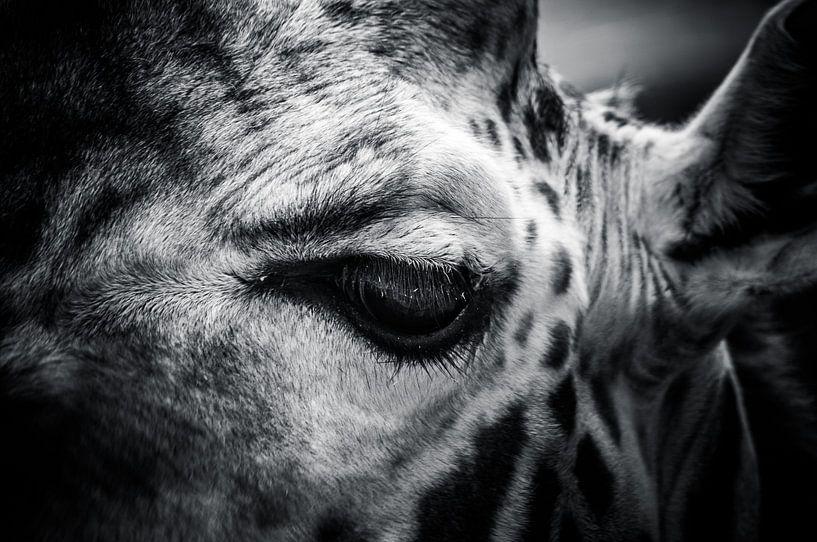 Giraffe in zwart / wit van Michiel ter Elst