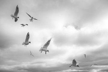 Möwen in der Luft von Barbara Brolsma