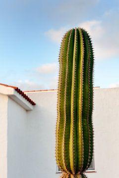Großer Kaktus vor einem Haus auf Fuerteventura von Peter de Kievith Fotografie