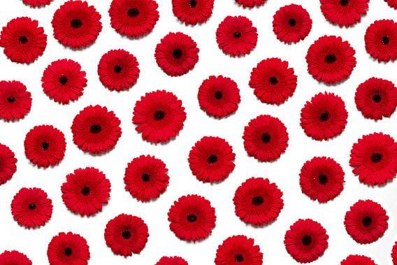 Rode bloemen muur