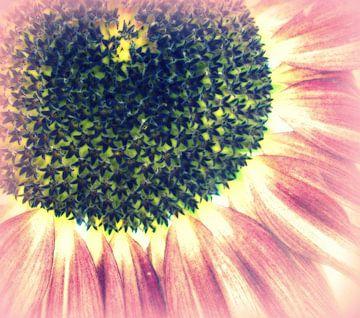 Sonnenblume van Annabella Rharbaoui