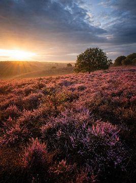 Posbank Sonnenaufgang von Mario Visser