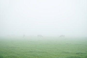 mistig weiland met vage koeien in de verte von Karin in't Hout