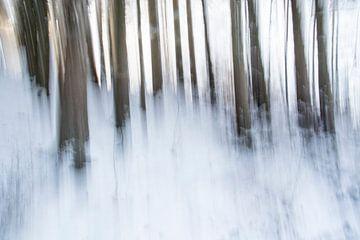 Pins dans la neige sur Guido Rooseleer