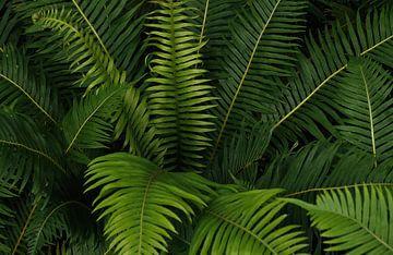 Dschungelpflanzen von Andreas Kilian