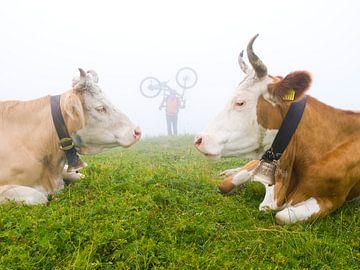 Mountainbiker mit Alpenkühen von Menno Boermans