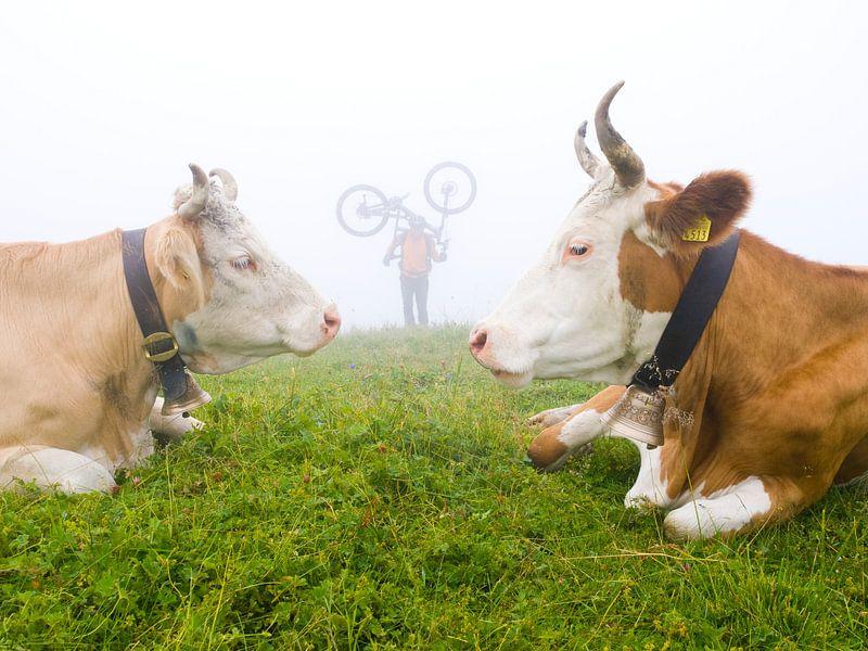 Alpenkoeien van Menno Boermans