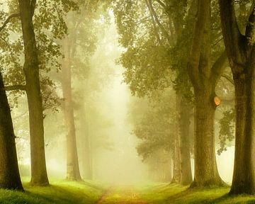 Allee der Wünsche, Gelderland von Lars van de Goor