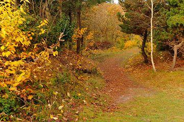 Herfst bos van Nicole Nagtegaal