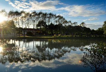 Reflectie bomen in water van Corinne Welp
