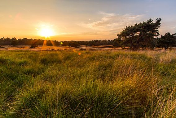 Gouden Zonsondergang van Joram Janssen