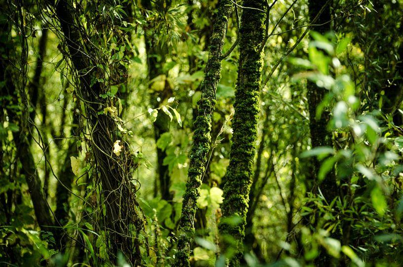 Mos en klimop - Biesbosch van Ricardo Bouman | Fotografie