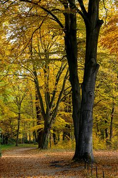 Herfst in Park Sanssoucci van Lavieren Photography