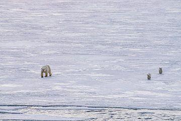 Frisch vermählte Eisbären von Merijn Loch