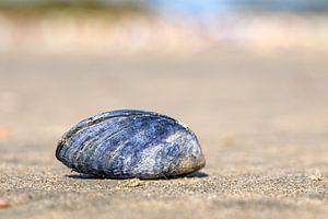 Blauwe mossel op het strand (1) van Sia Windig
