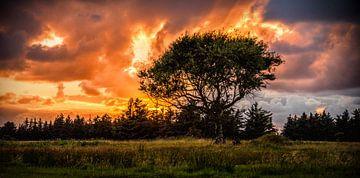 Kleurrijke hemel van Evelien Scholten
