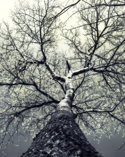 boom in de lente met bloesem van Anouschka Hendriks