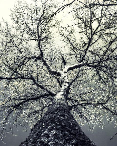 boom in de lente met bloesem