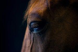 Overdenking (portret van een paard)