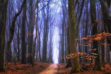 Wonderland van Rigo Meens