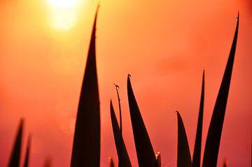 Dutch sunset with rich colors sur Arno Wolsink