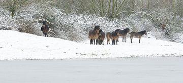 Eendaags winter in Geuzenwaard  van Jeroen Kleverwal
