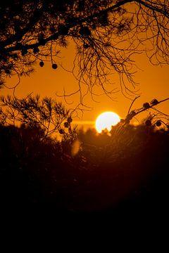 Sunset over La Joya van Alexander Wolff