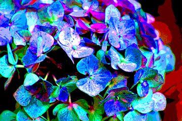 Bloemblaadjes /Petals / Blütenblätter/ Pétales van Joke Gorter