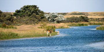 Landschap van de Amsterdamse Waterleidingduinen&Damhert. von Robert Moeliker