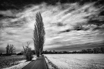 Winterlandschap met boom en sneeuw voor wolkenformatie in zwart-wit van Dieter Walther