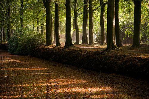Sfeervol verlichte boslaan in de herfst