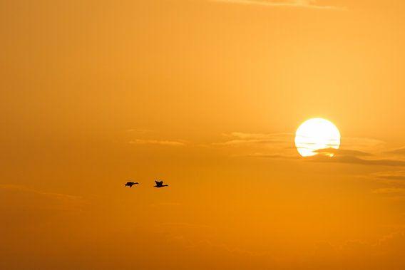 Bergeenden bij zonsondergang