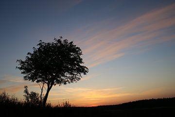 zonsondergang Heide met boom (veluwe) van Frans Roos