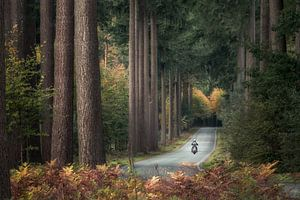 The lone biker