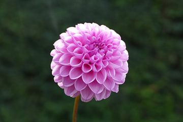 Paarse bloem van Mark Sebregts