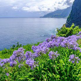 Le lis du Nil fleurit l'île de Madère par une belle journée d'été sur Sjoerd van der Wal
