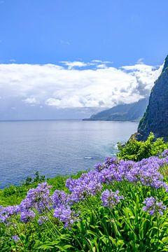 Nilschlüsselblume blüht auf der Insel Madeira an einem schönen Sommertag von Sjoerd van der Wal