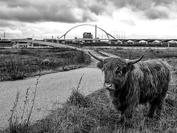 Nijmegen sur ÇaVa Fotografie