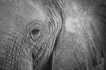 Close-up oog van een Afrikaanse olifant van Krijn van der Giessen