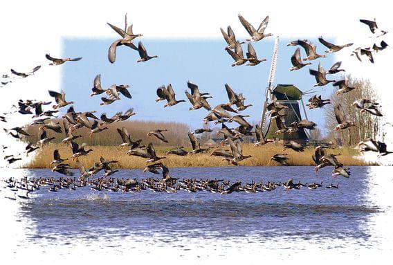 Flight of Goose  van Pim Feijen
