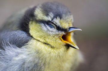 Vogel kleines Meisenkind