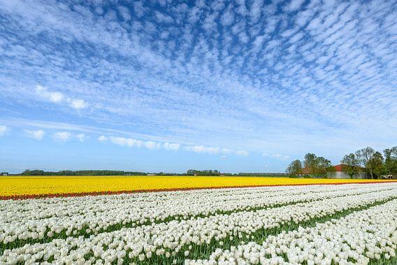 Tulpen in de lente van Sjoerd van der Wal