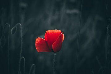 Poppy van Sabrina Springefeld