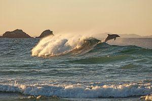 Australien Delfin - Sprung in den Sonnenuntergang