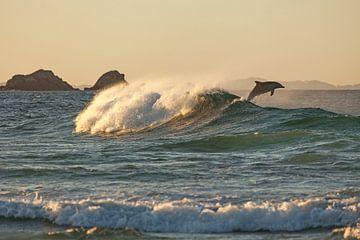 Australië Dolfijn - Spring in de zonsondergang van Jiri Viehmann