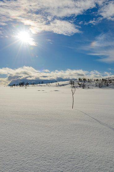 Besneeuwde weide aan de oever van een Fjord in Noord-Noorwegen in de winter