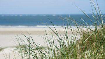 Helmgras strand Texel van Barbara Brolsma